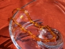 Amber Necklaces ANECK04